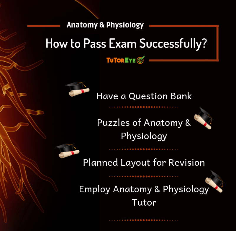 anatomy and physiology tutor